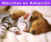 Nueva Sección - Mascotas en adopcion
